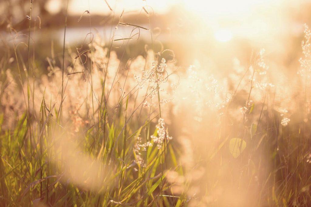 rayon de soleil sur des épis de blé