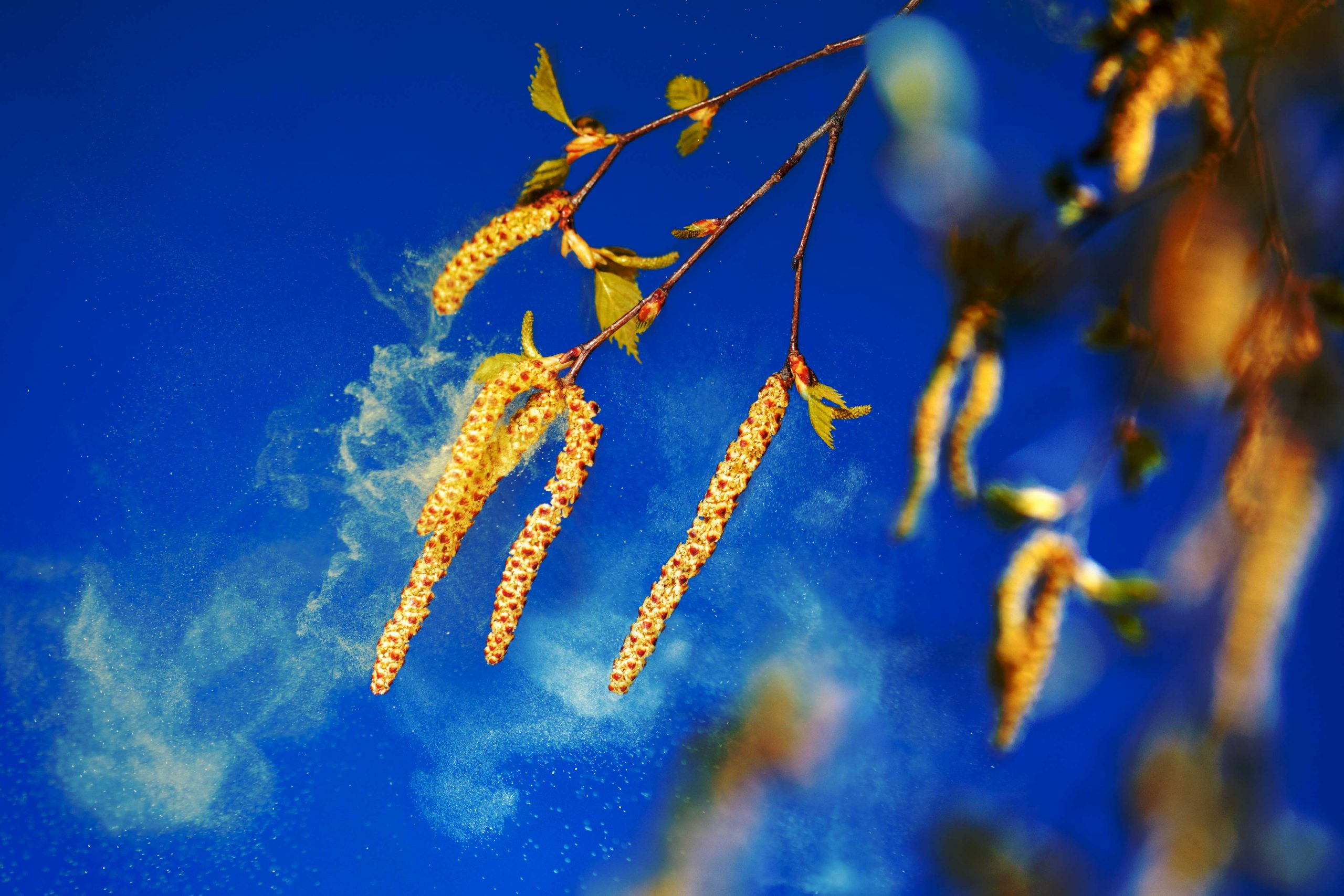 Détecter en temps réel la présence des pollens dans l'air